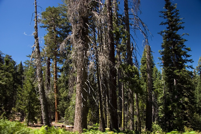 Sequoia & Kings Canyon, California 0015