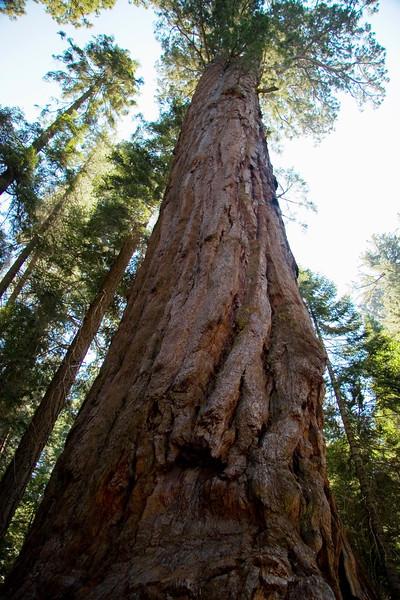 Sequoia & Kings Canyon, California 0009