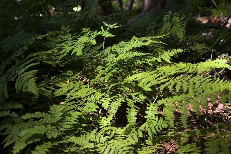 Sequoia & Kings Canyon, California 0014