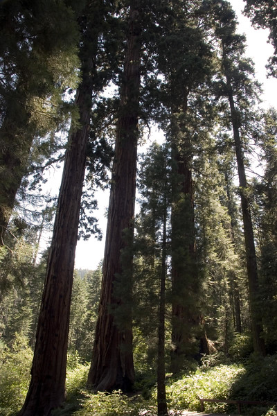 Sequoia & Kings Canyon, California 0010