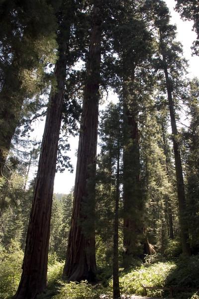 Sequoia & Kings Canyon, California 0010