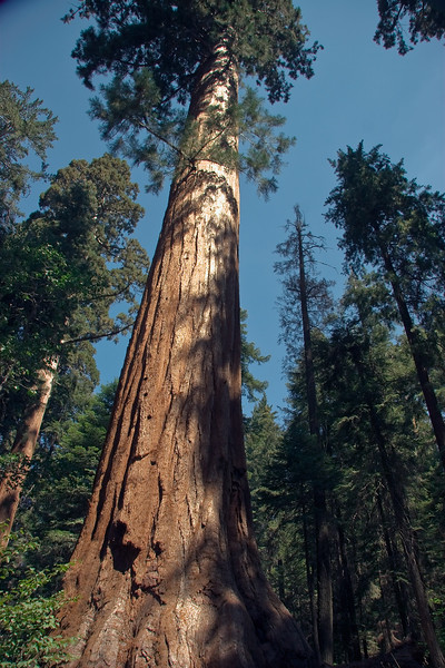 Sequoia & Kings Canyon, California 0007