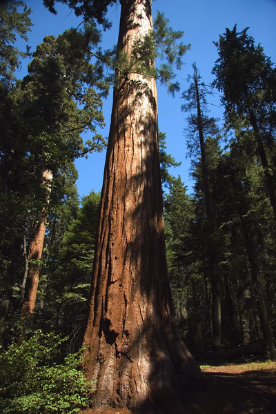 Sequoia & Kings Canyon, California 0006