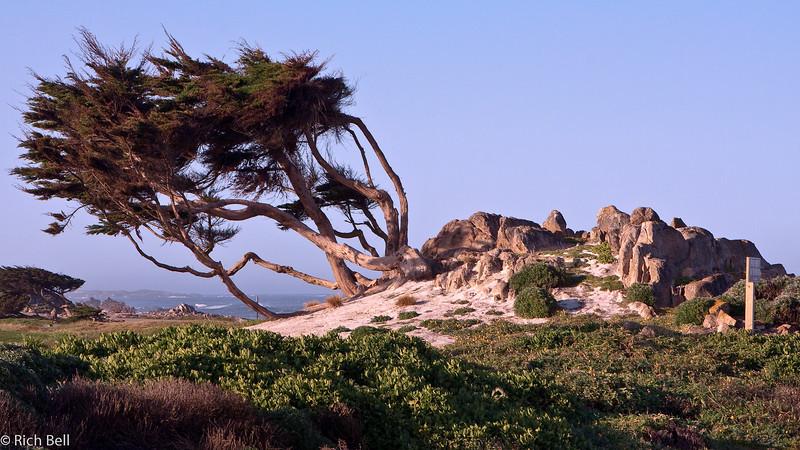 20100327_california_0174