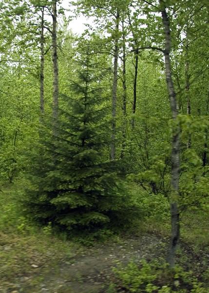 Shagway, Alaska 0004