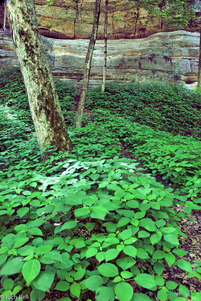 20060605 Starved Rock SP 0147