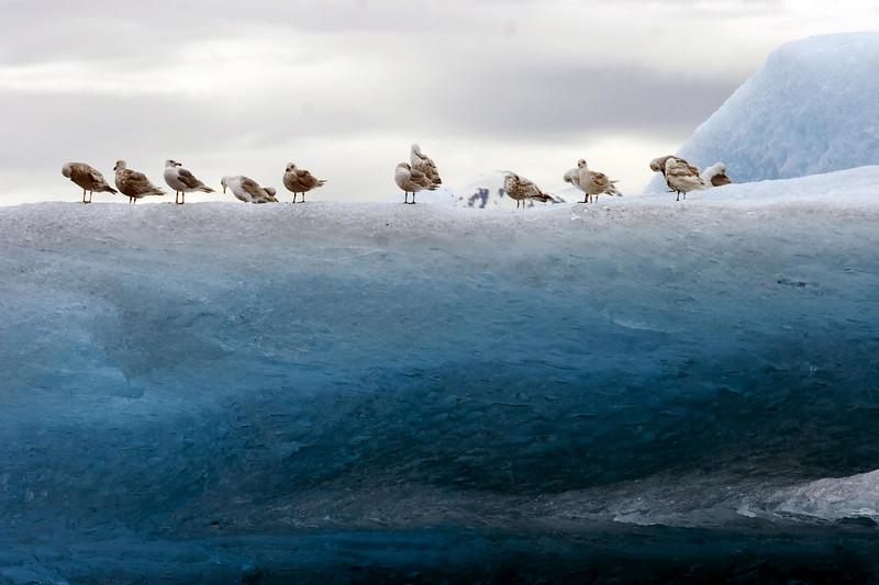 Sawyer Glacier, Alaska 0014