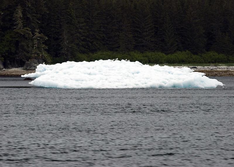 Sawyer Glacier, Alaska 0008