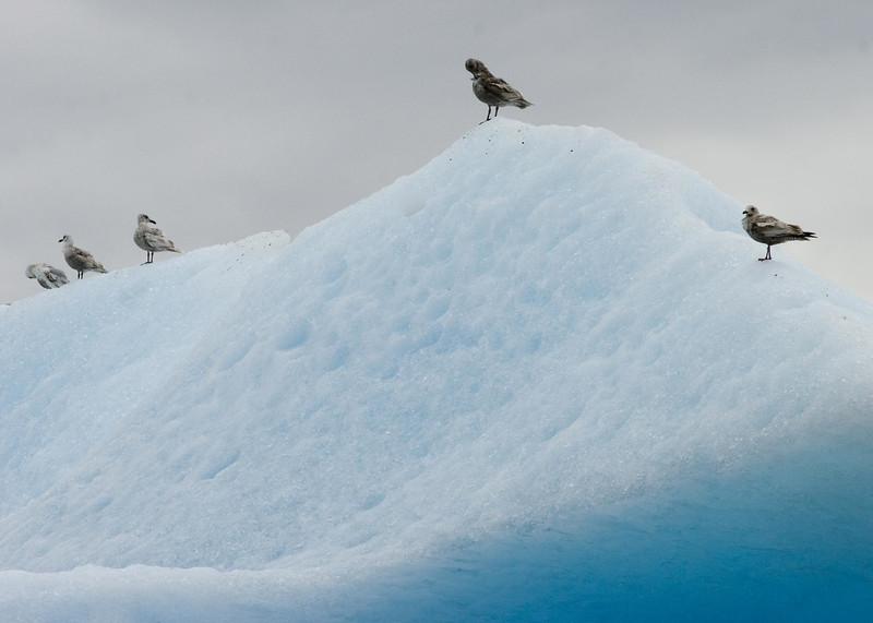 Sawyer Glacier, Alaska 0015