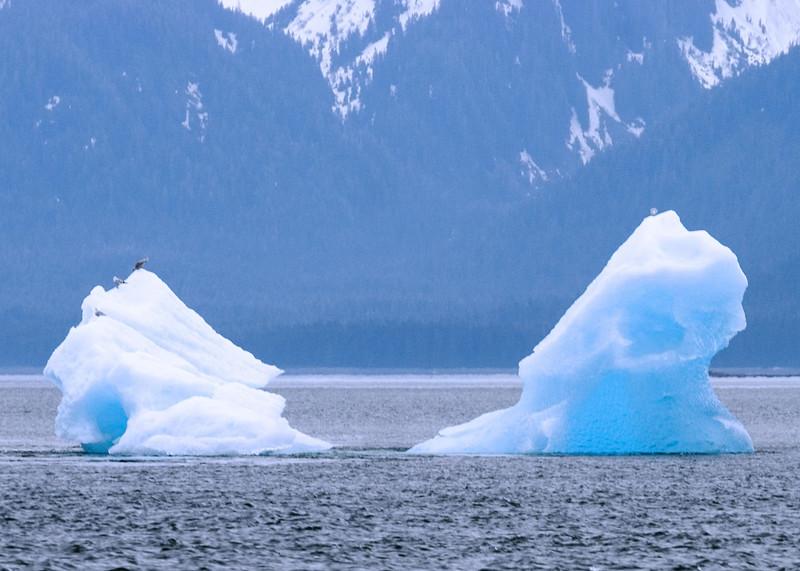 Sawyer Glacier, Alaska 0011