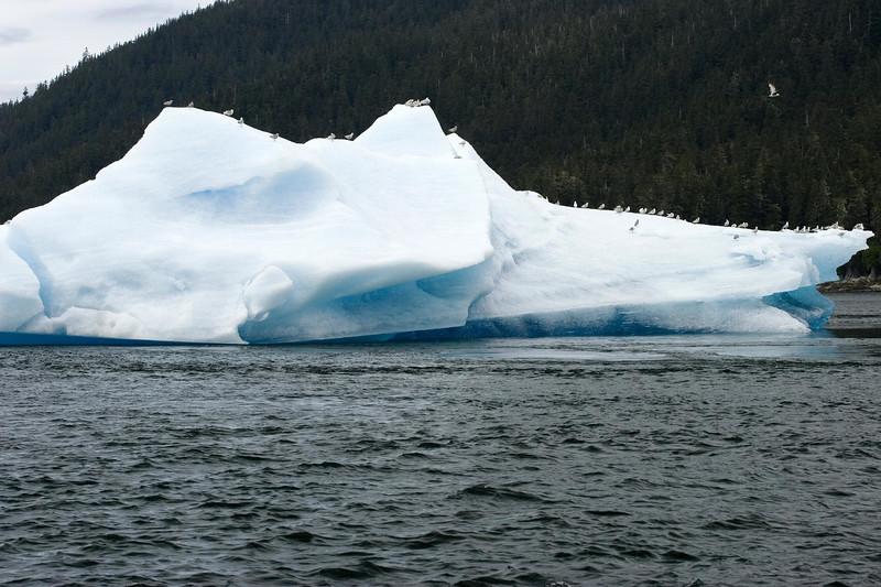 Sawyer Glacier, Alaska 0012