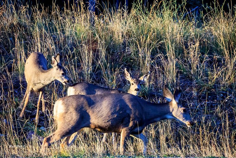 20131008 Wyoming _0462
