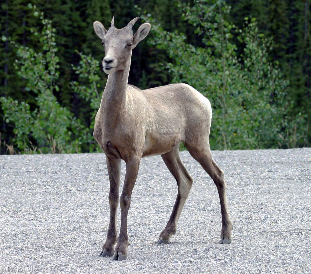 20030809 Banff Canada 0430