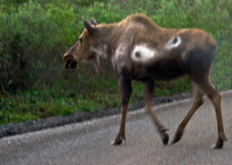 Denali National Park, Alaska 0006