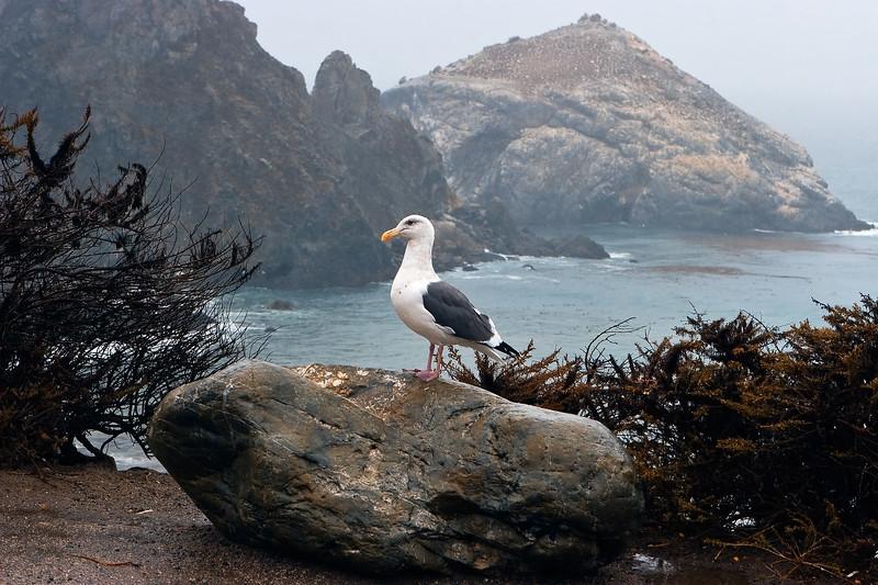 California Coast 0049
