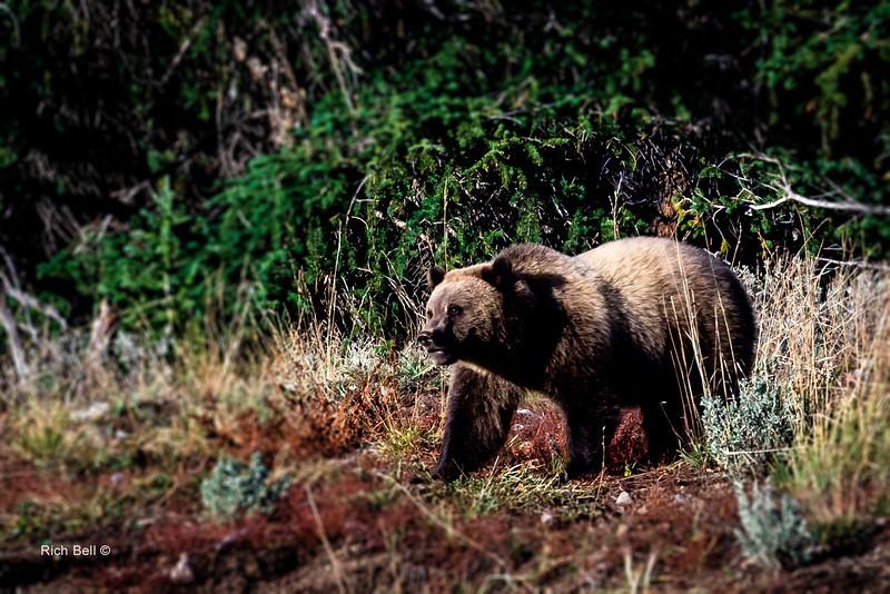 20131008 Wyoming _0357