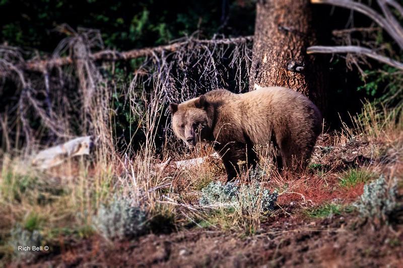 20131008 Wyoming _0372