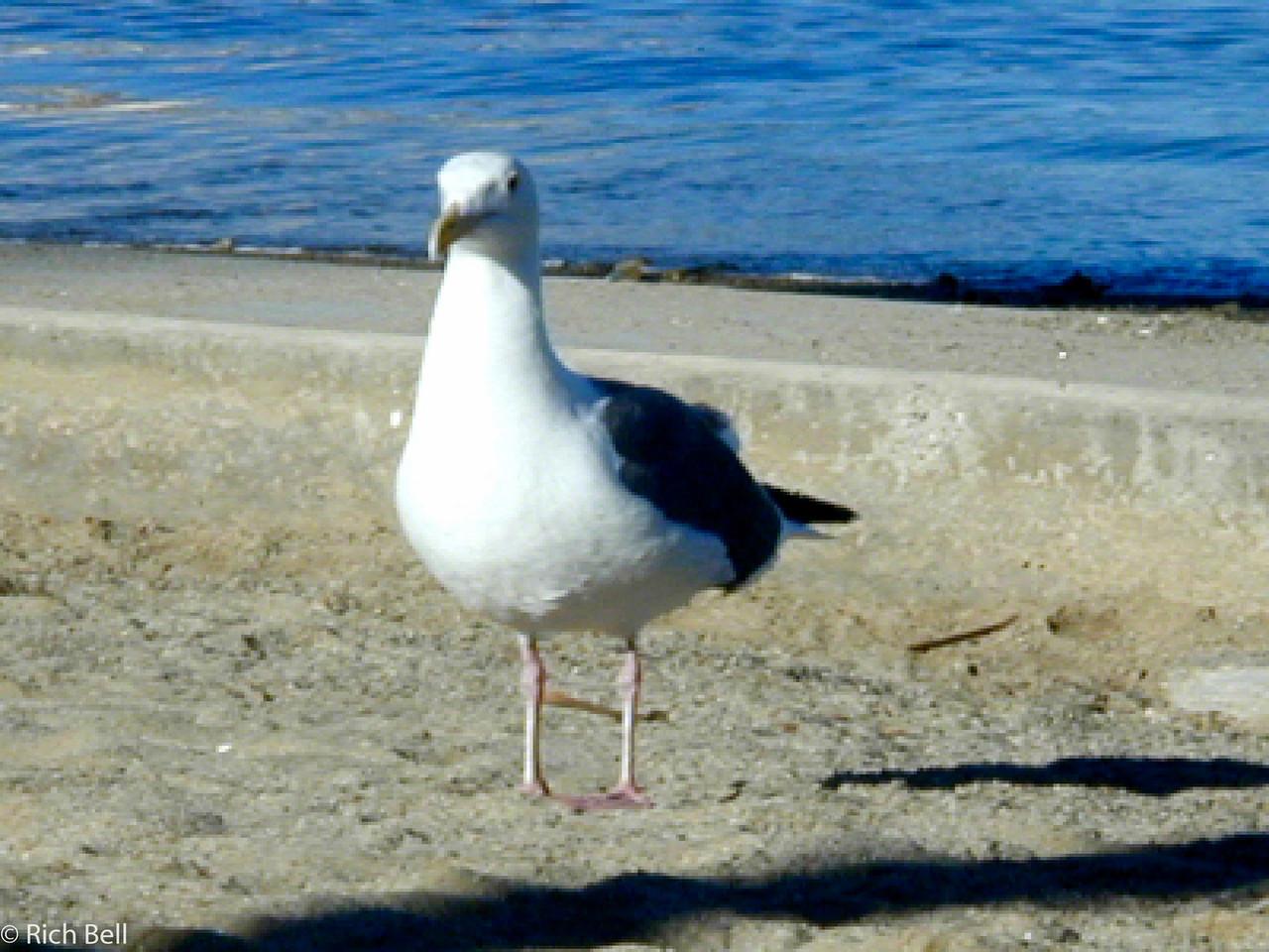 20100721Sea Gull 20047