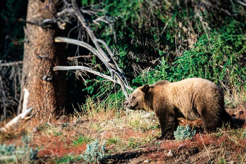 20131008 Wyoming _0364
