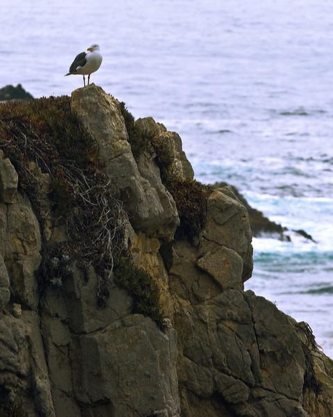 California Coast 0034