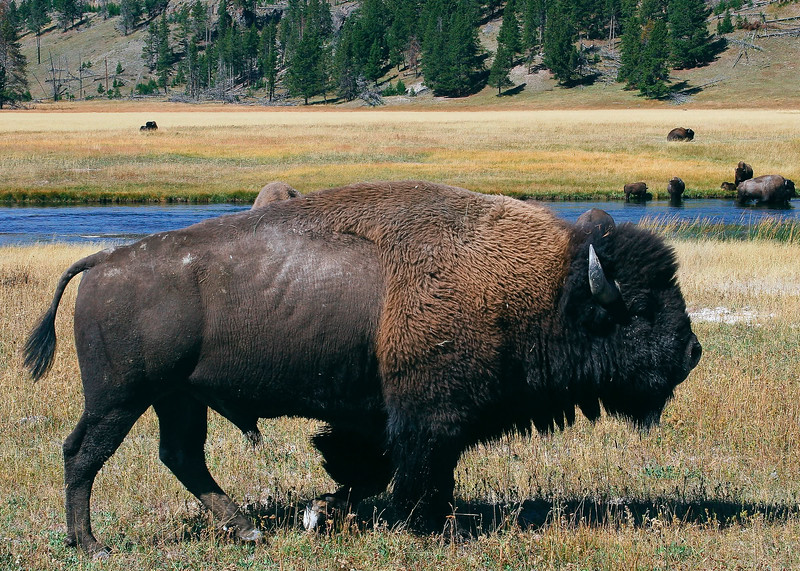 Yellowstone National Park Wyoming 0003