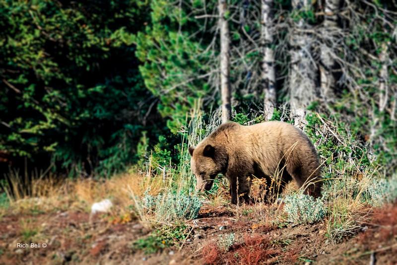 20131008 Wyoming _0331