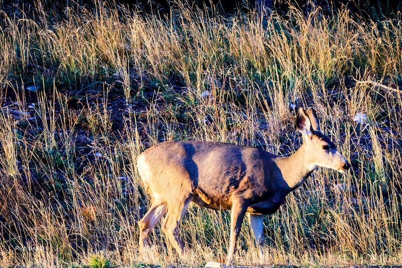 20131008 Wyoming _0526
