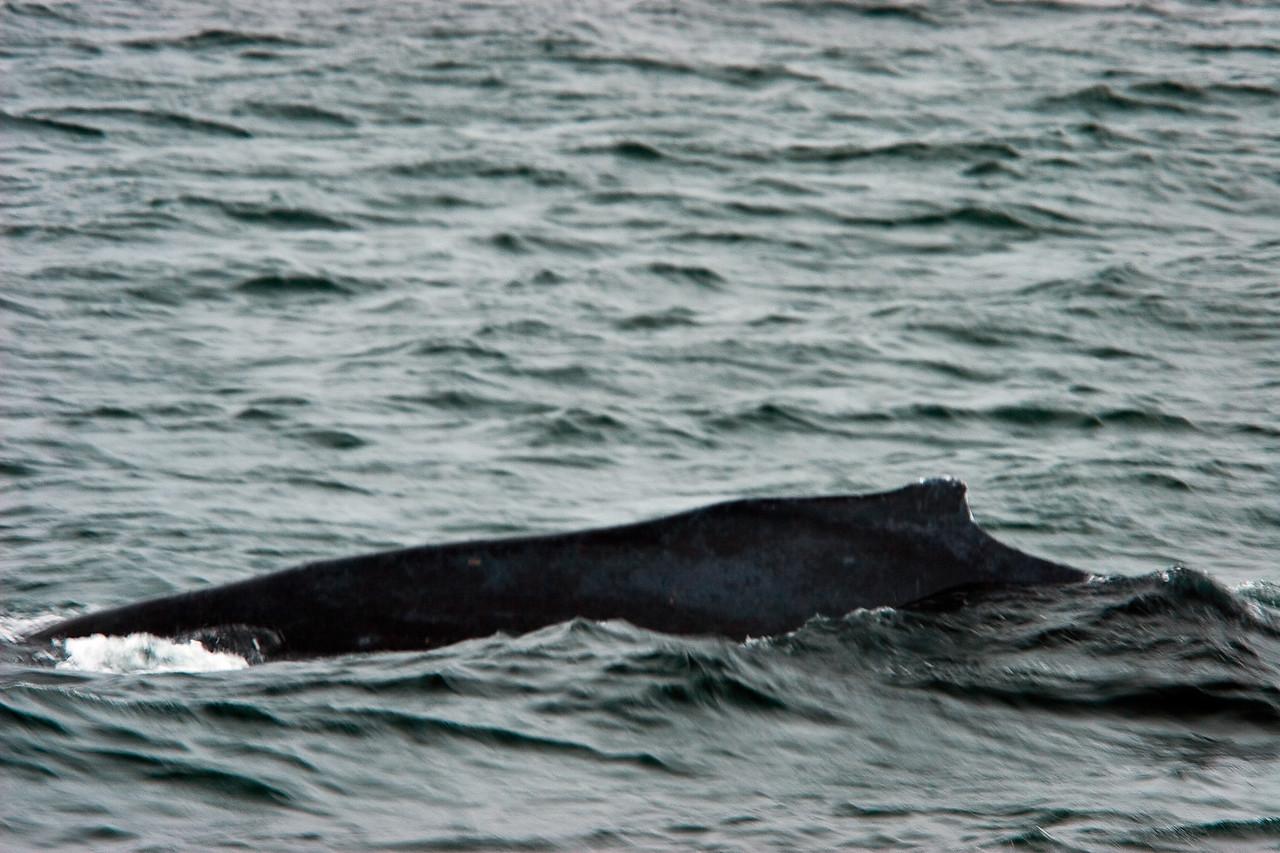 20070606  Icy Point Strait 1298