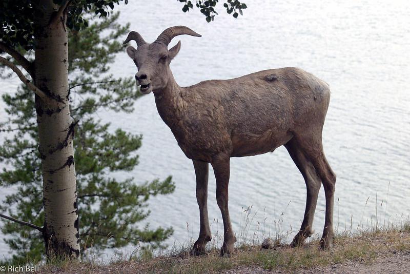20030809 Banff Canada 0440