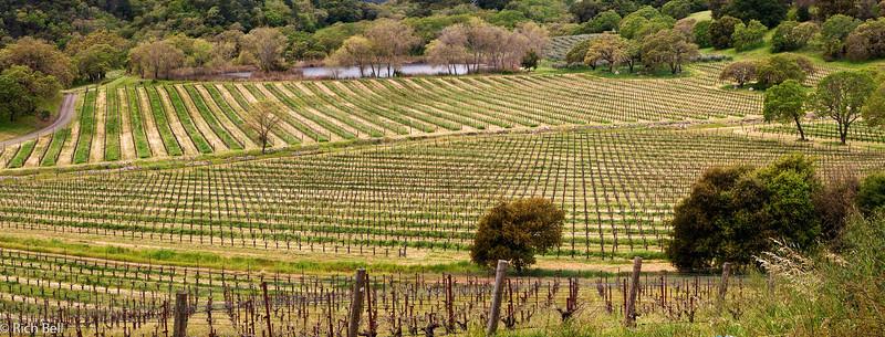 20100331 Phelps Winery Panorama 01