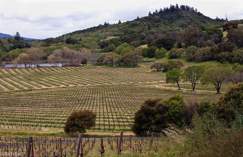 20100331 Phelps Winery Panorama 02