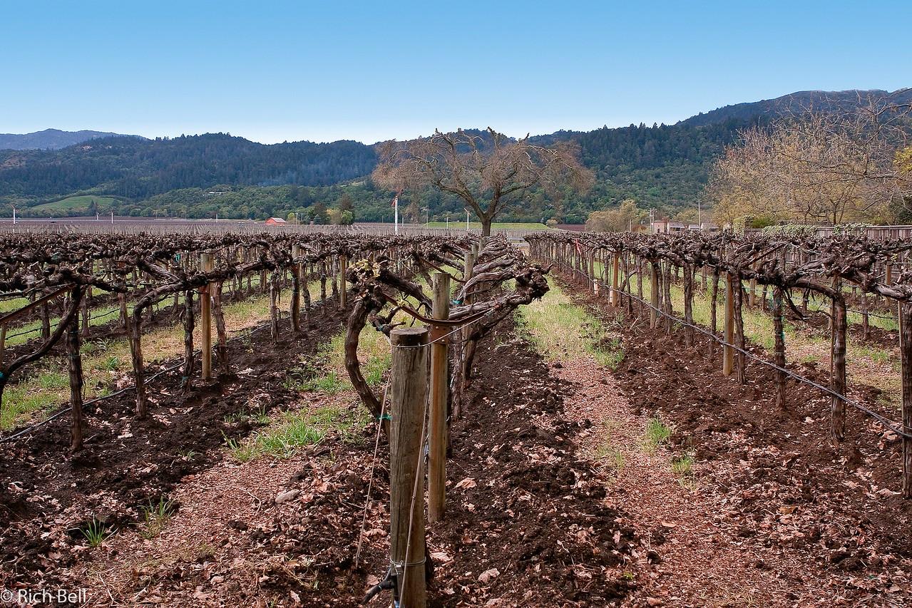 20100331_california_0003