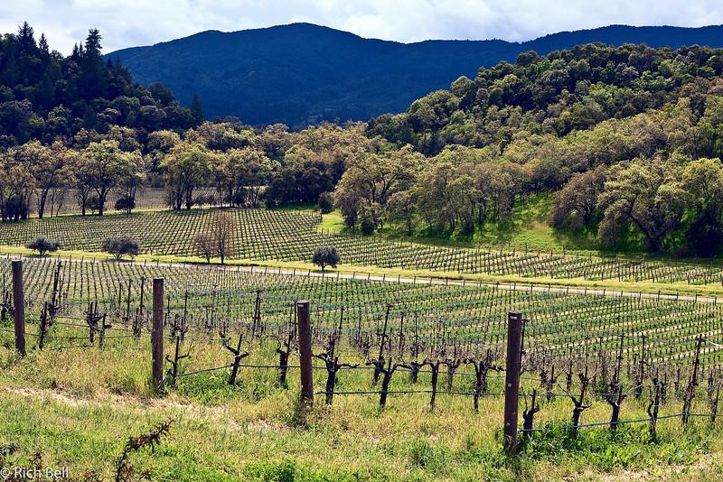 20100331_california_0026