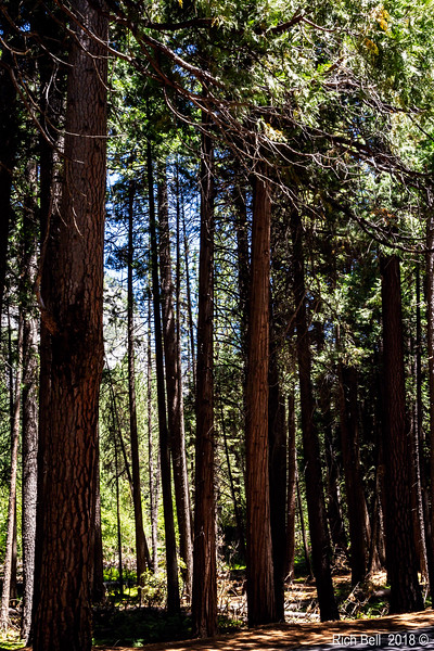 06282018 Yosemite 1211 copy