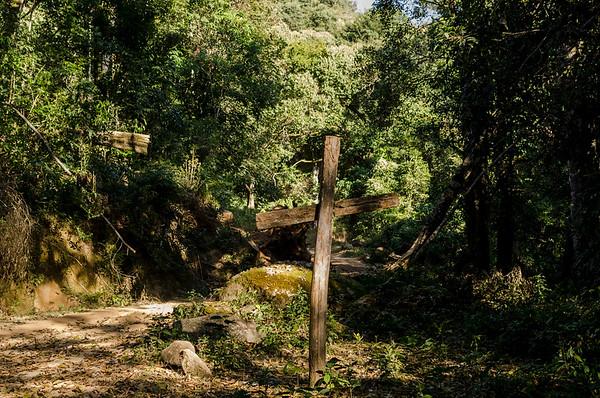 Faith in jungle