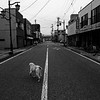 An abandoned dog walked alone on the street  in Namie town after nuclear disaster.  Namie town Futaba, Fukushima 11th Apr 2011
