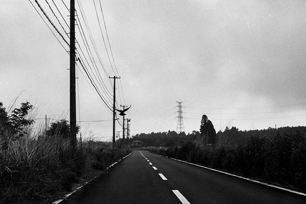 stray land