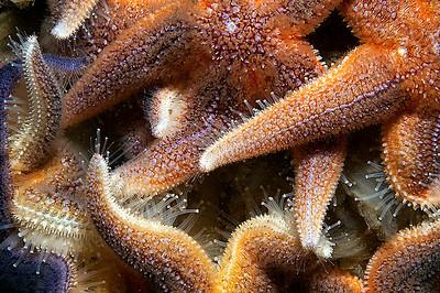 Stjärnkalas