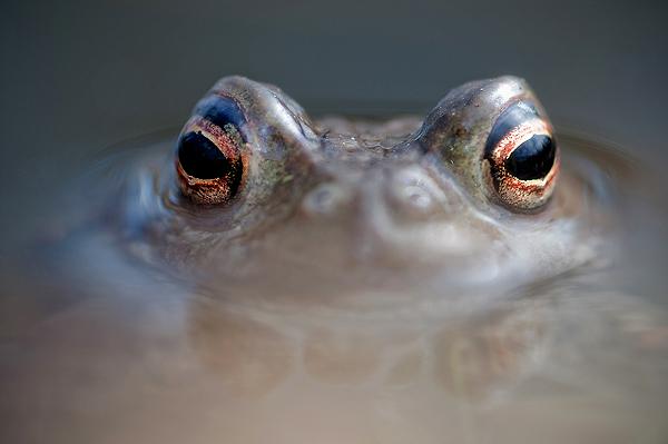 närkontakt amfibie