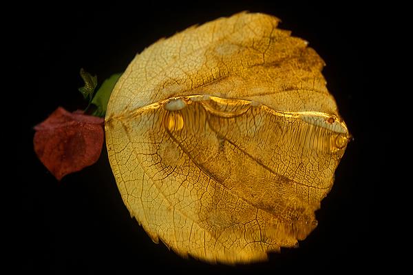 höstlöv
