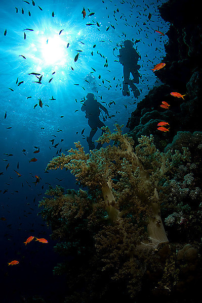 Röda havet