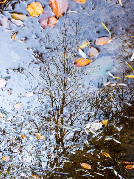 Riflesso di un autunno passato