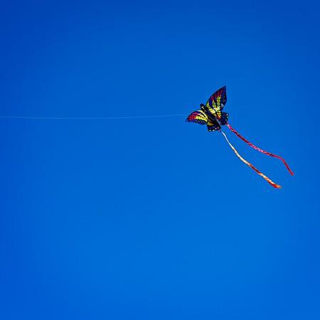 Kite Fest 2020-03-0117