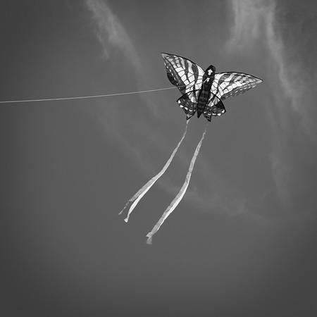 Kite Fest 2020-03-0154
