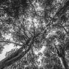 Trær 1
