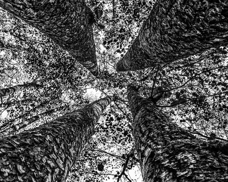 Trær 2