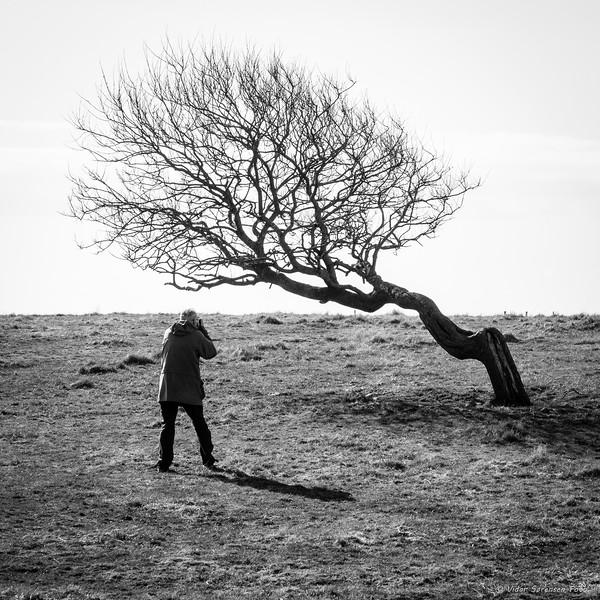 En fotograf og et tre