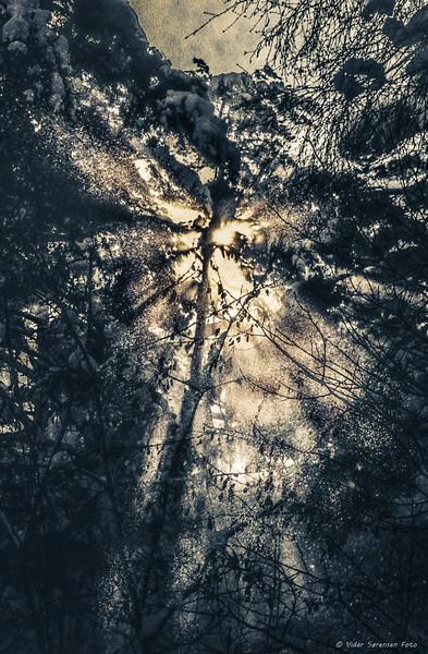 Trær 3