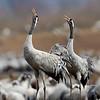 Tranor Cranes