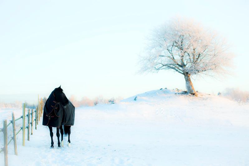 Waloro, vinter
